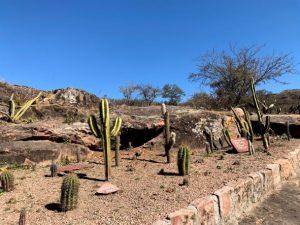 paseo cactus atahualpa
